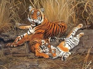 Postal: Imagen de una familia de tigres
