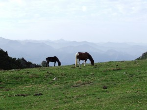 Dos caballos pastando con los Picos de Europa de fondo