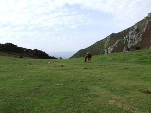 Postal: Caballos pastando en un prado verde