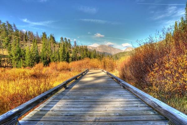 Camino de madera en un campo otoñal