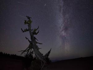 Un árbol seco bajo un cielo cubierto de estrellas