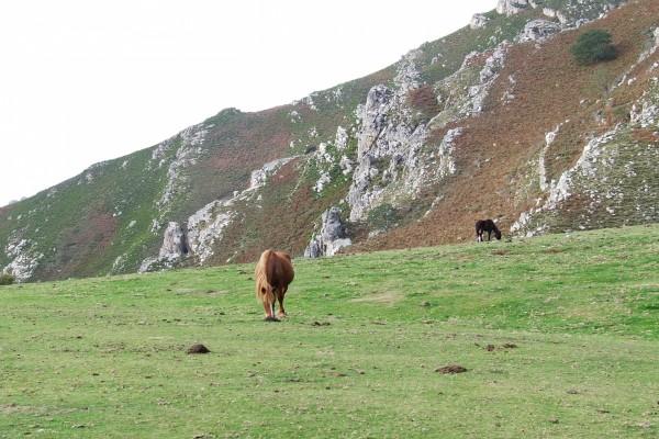 Dos caballos salvajes en un prado verde