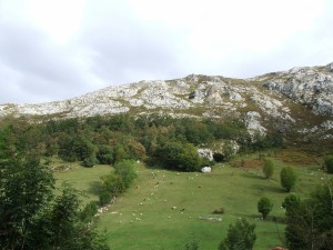 Vacas y ovejas en una majada