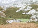 Caballos libres en las montañas de los Picos de Europa (Asturias)