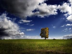 Un árbol en mitad de un prado verde