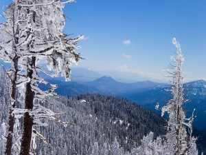 Montañas y árboles blancos
