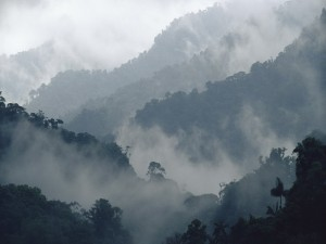 Postal: Niebla cubriendo una selva