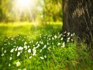 Postal: Flores primaverales junto a un árbol