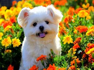 Postal: Un perro entre flores primaverales