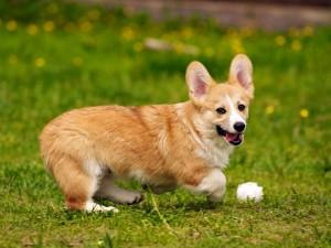 Postal: Perrito jugando en la hierba