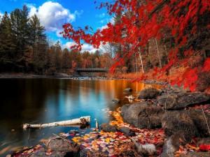 Postal: Otoño rojizo en la orilla de un río