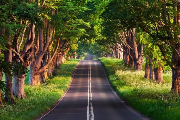 Árboles a ambos lados de una carretera
