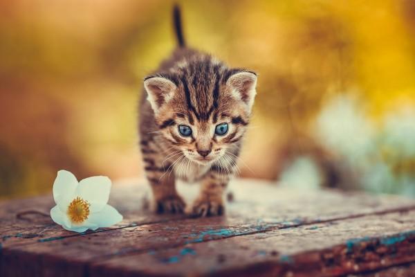 Gatito junto a una flor blanca