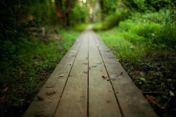 Camino de madera en un bosque