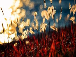 Plantas brillando al sol