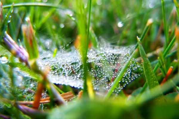 Telaraña con gotas de agua entre la hierba