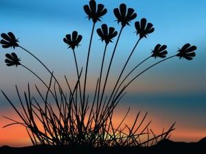 Silueta de una planta al amanecer