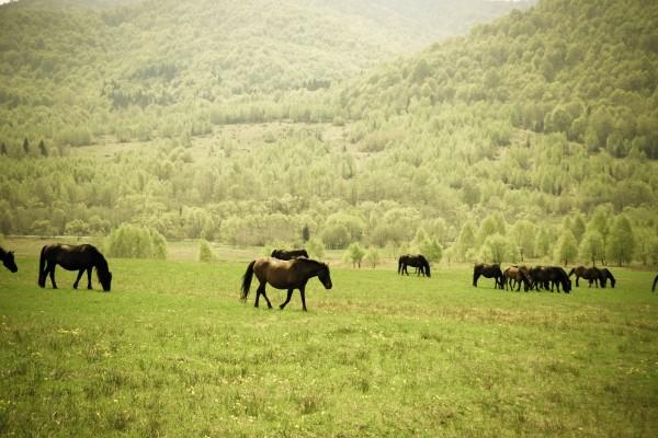Caballos en una pradera verde