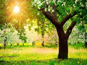 El sol iluminando los árboles en primavera
