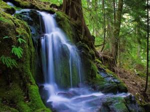Hermosa cascada junto a un gran árbol