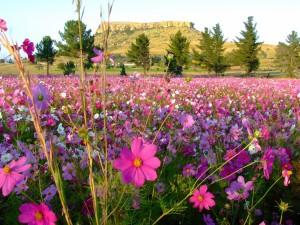 Un hermoso campo de flores silvestres en primavera