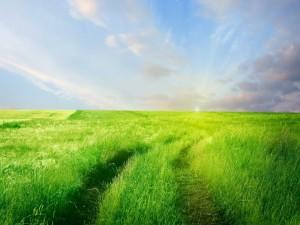 Postal: Camino en un campo de hierba