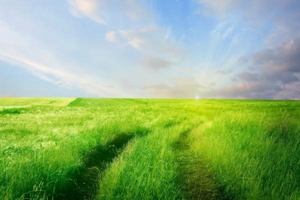 Camino en un campo de hierba