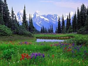Campo de flores en un claro del bosque