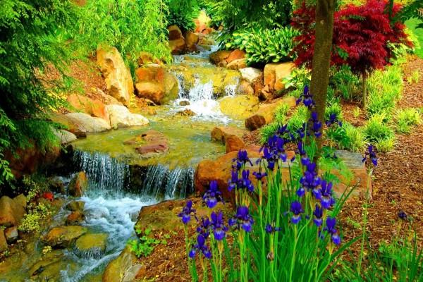 Pequeño arroyo en un jardín con flores y arbustos