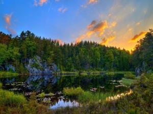 Pequeño lago junto a un bosque