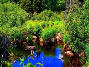 Pequeño estanque que refleja el cielo azul