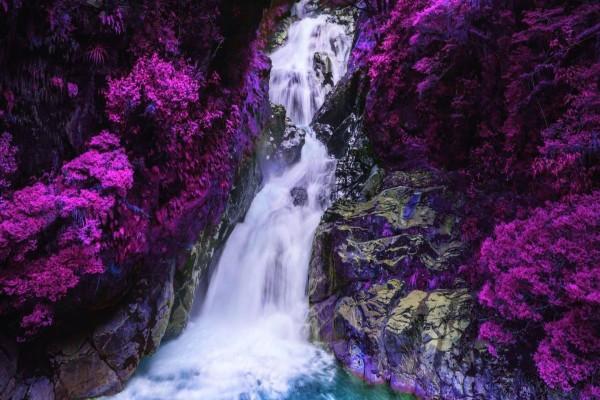 Cascada rodeada de plantas color púrpura
