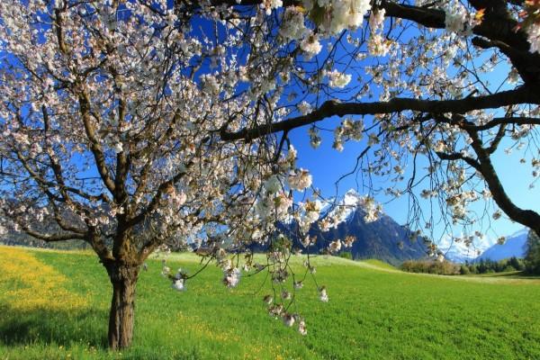 Árboles florecidos en un prado verde