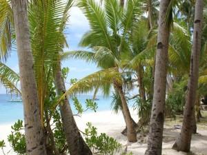 Playa cubierta de palmeras