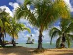 Pequeñas palmeras junto a una playa