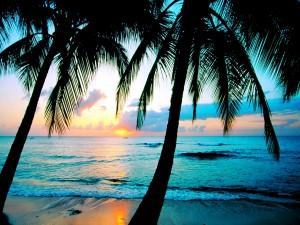Admirando el amanecer entre dos palmeras