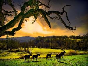 Caballos vistos al amanecer