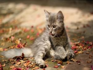 Gatito entre hojas secas