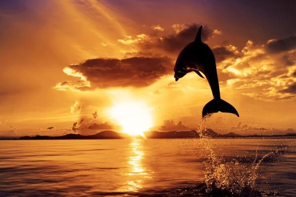 Delfín saltando en el océano
