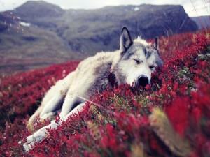 Perro dormido sobre las plantas