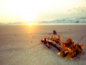 Algas sobre la arena de una playa