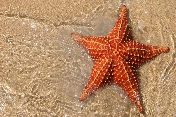 Estrella de mar en la orilla