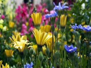Flores de colores en un jardín