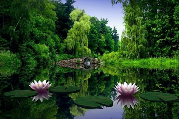 Nenúfares reflejados en un estanque