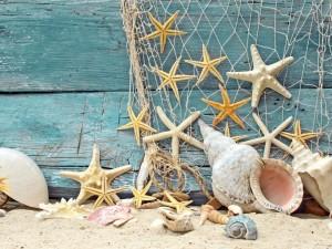Espléndidas estrellas de mar y conchas