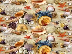 Postal: Estrellas de mar, conchas, corales y otro seres marinos sobre la arena