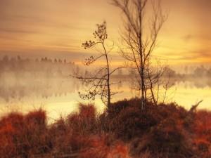 Bruma sobre un río al amanecer
