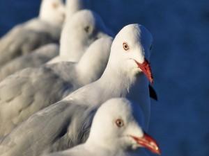 Gaviotas en fila contemplando el mar