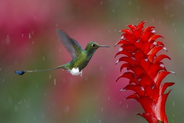 Colibrí bajo la lluvia