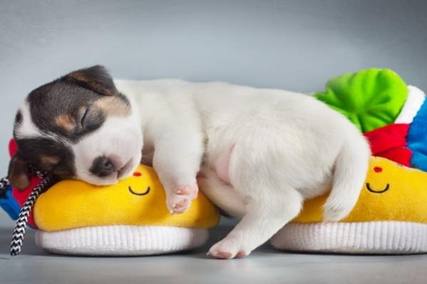 Lindo perrito durmiendo